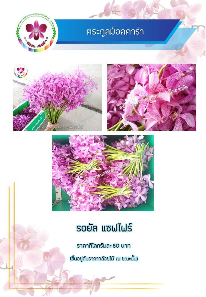 9757ed9ed7-phaph-ning9.jpg