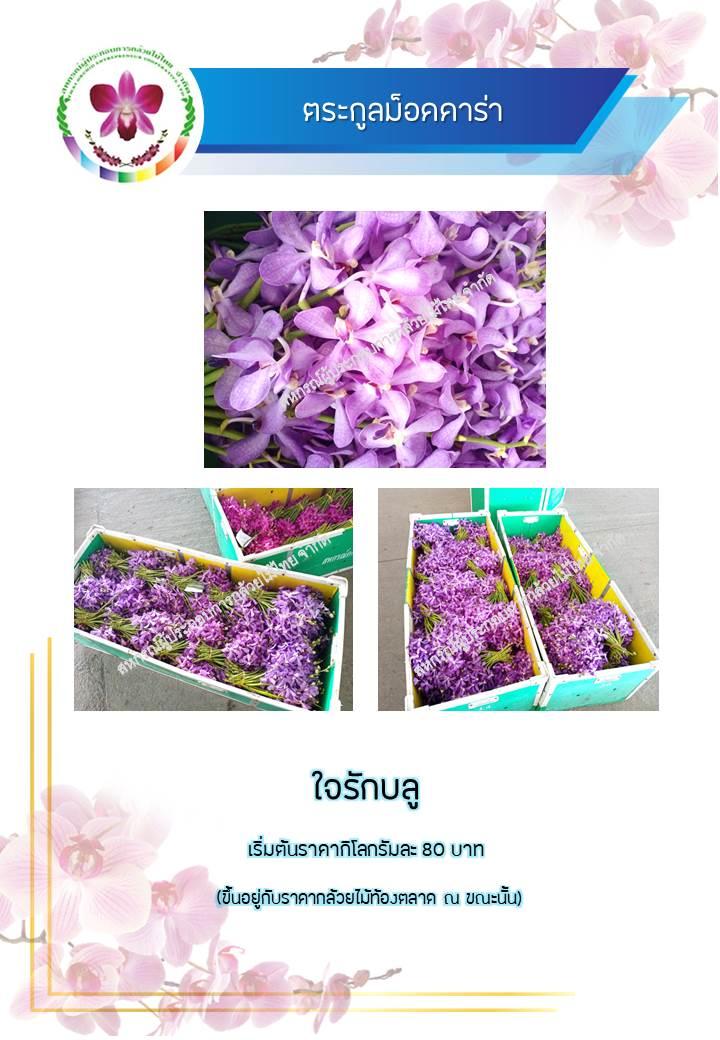 983e396024-phaph-ning2.jpg