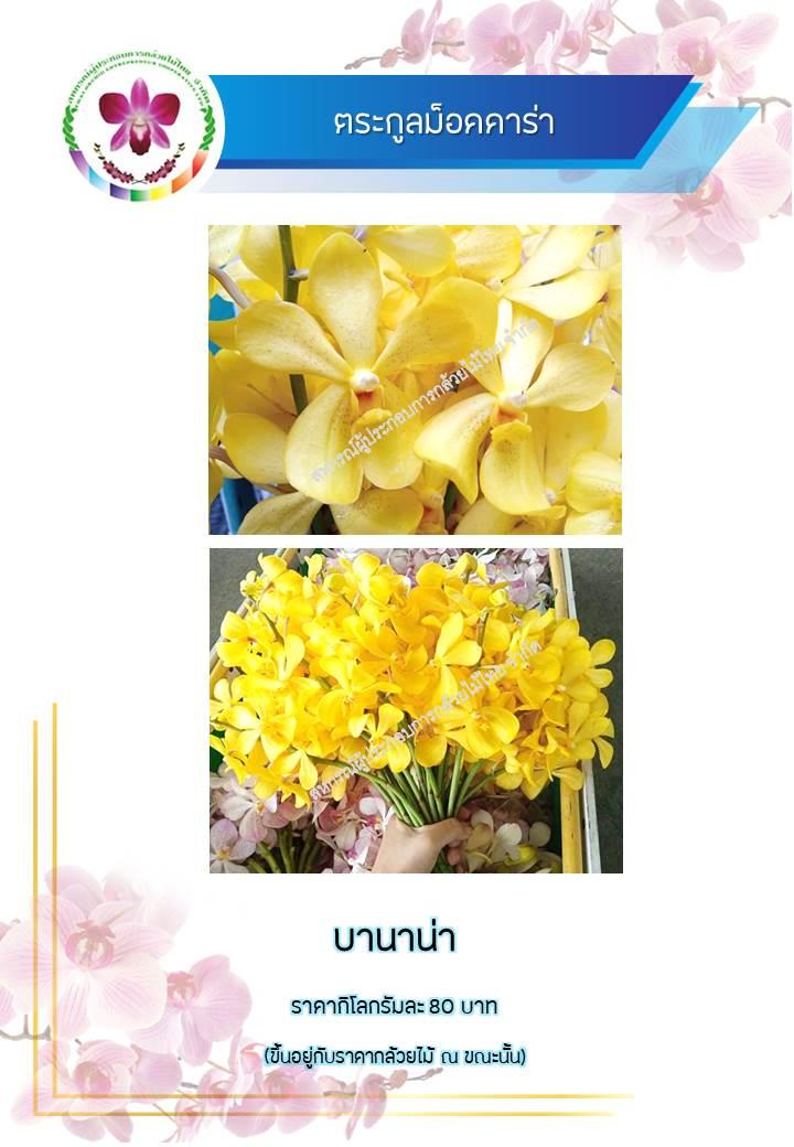 fed3e2a837-phaph-ning13.jpg